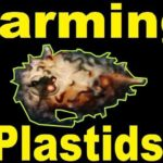 Best ways to farm Plastids in Warframe (2020)